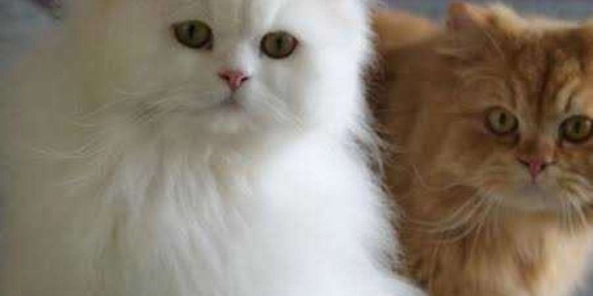 Things you must know before cat breeding